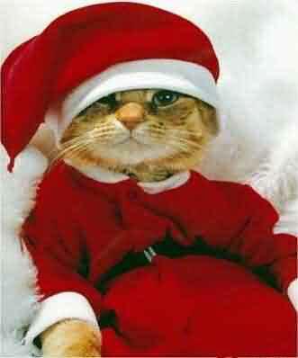[img width=331 height=398]http://www.kerstweb.nl/kerstplaatjes/grappig/hh-xmascat.jpg[/img]